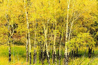 Photograph - Autumn Aspens by Ben Graham