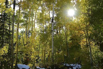 Fathers Day 1 - Autumn Aspens by Clyn Robinson
