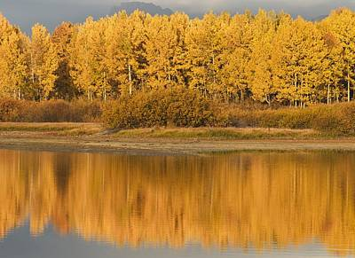 Autumn Aspens Reflected In Snake River Art Print