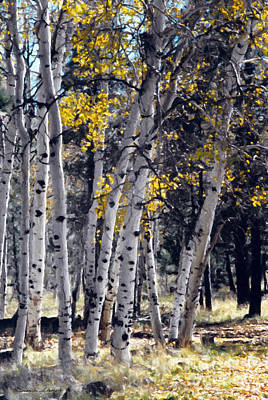 Painting - Autumn Aspens by Susan Schroeder