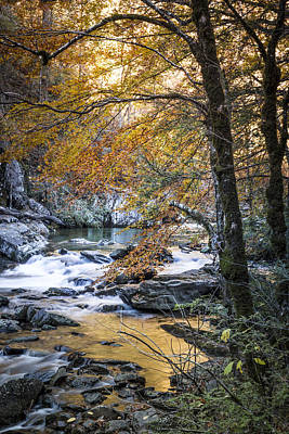 Autumn At Citico Creek Art Print by Debra and Dave Vanderlaan