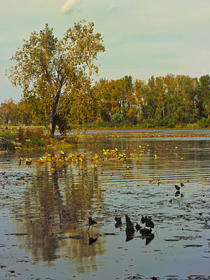 Photograph - Autumn At East Harbor State Park 6 by Shawna Rowe