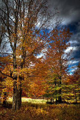 Photograph - Autumn At Mc Cauley Mountain by David Patterson