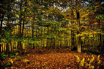 Photograph - Autumn At Mccauley Mountain II by David Patterson