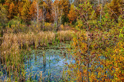 Photograph - Autumn At Nature Preserve by Gene Sherrill