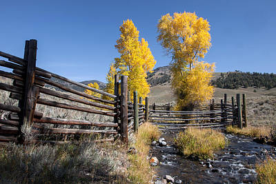 Art Print featuring the photograph Autumn At The Lamar Buffalo Ranch by Jack Bell