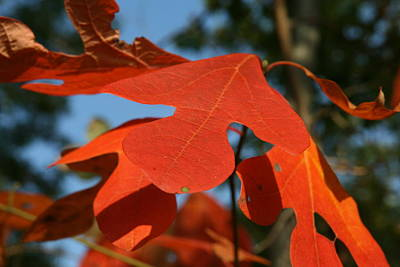 Autumn Attention Art Print by Neal Eslinger