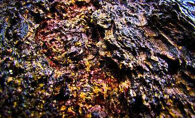 Photograph - Autumn Bark by Eva Kondzialkiewicz