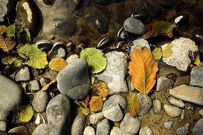 Leaves On Rock Photograph - Autumn Beach Debris by Bonnie Bruno