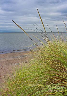 Photograph - Autumn Beach Grasses by Barbara McMahon