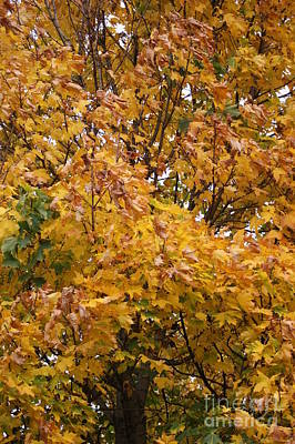 Autumn Beauty 2 Art Print by Carol Lynch