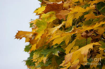 Autumn Beauty 6 Art Print by Carol Lynch
