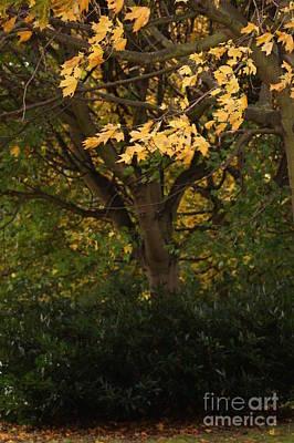 Autumn Beauty 7 Art Print by Carol Lynch