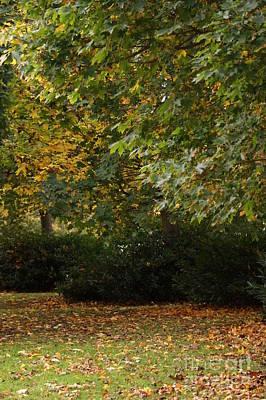 Autumn Beauty 9 Art Print by Carol Lynch