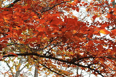 Print featuring the photograph Autumn Beauty by Candice Trimble