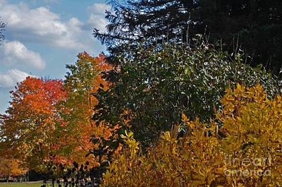 Art Print featuring the photograph Autumn Beauty by Judy Wolinsky