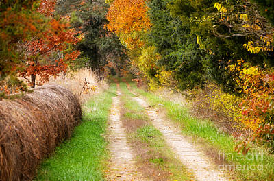 Autumn Peggy Franz Photograph - Autumn Beauty On Rural Dirt Road by Peggy Franz