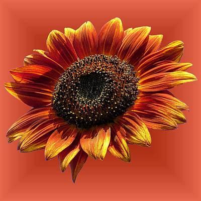 Photograph - Autumn Beauty Orange by MTBobbins Photography