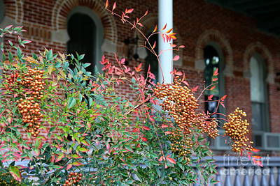 Photograph - Autumn Berries In Tampa by Carol Groenen