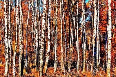 Photograph - Autumn Birch by Benjamin Yeager