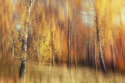 Move Photograph - Autumn Birches by Gustav Davidsson