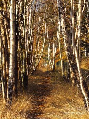Baar Photograph - Autumn Birches by Lutz Baar