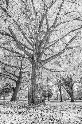 Photograph - Autumn Black And White by David Haskett