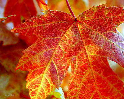 Photograph - Autumn Blaze by Andrea Platt