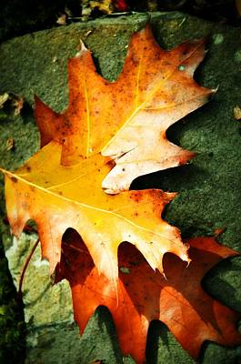 Autumn Blaze Art Print by JAMART Photography