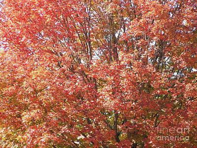 Photograph - Autumn Blaze by Kevin Croitz