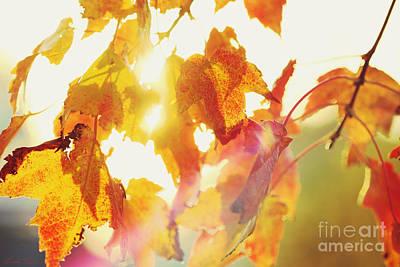 Photograph - Autumn Blaze by Linda Lees