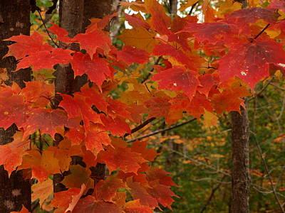 Autumn Blaze Original by Melissa Peterson