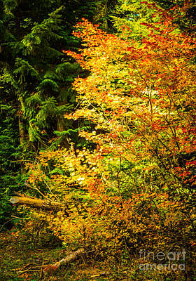 Photograph - Autumn Blaze by Patricia Babbitt