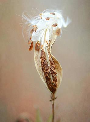 Photograph - Autumn Arrival by Fraida Gutovich