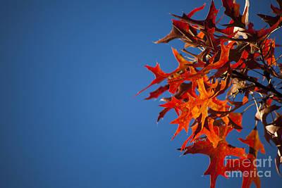Autumn Blue Art Print by Wayne Moran