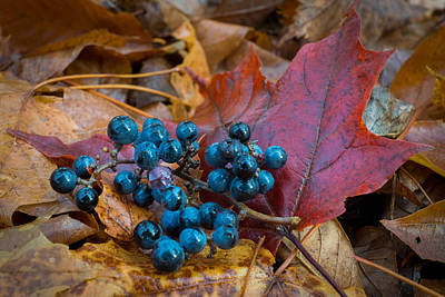Photograph - Autumn Blues by Bill Pevlor
