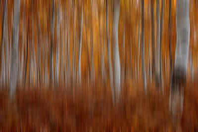 Photograph - Autumn Blur by Darlene Bushue