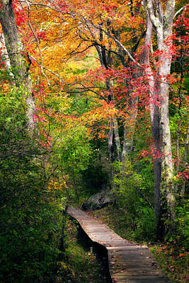 Autumn Scene Photograph - Autumn Boardwalk by Bill Wakeley
