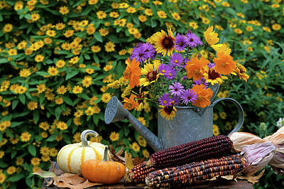 Asters Photograph - Autumn Bouquet, Asters, Cosmos by Richard and Susan Day