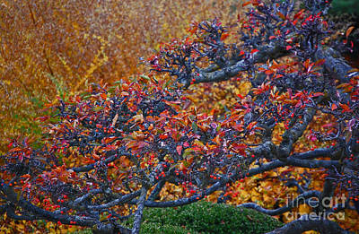 Photograph - Autumn Branches By Jrr by First Star Art