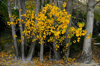 Photograph - Autumn Breakout by Jenny Setchell