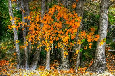 Photograph - Autumn Breakout No.2 by Jenny Setchell