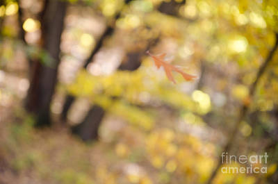 Photograph - Autumn Breeze by Tamara Becker
