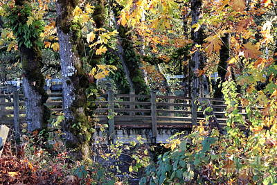Photograph - Autumn Bridge by Erica Hanel