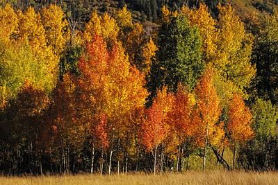 Autumn Brillance Original by Teri Virbickis