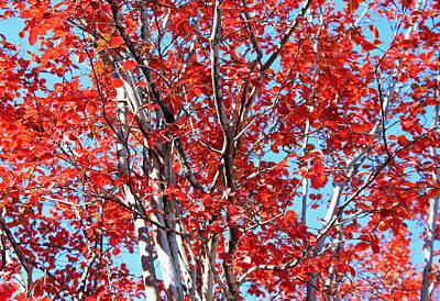 Autumn Brilliance V Art Print by Suzanne Gaff