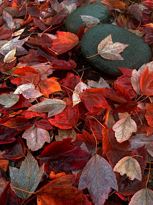 Photograph - Autumn Broadcast by Gwyn Newcombe