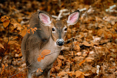 Autumn Buck Art Print by Tracy Munson