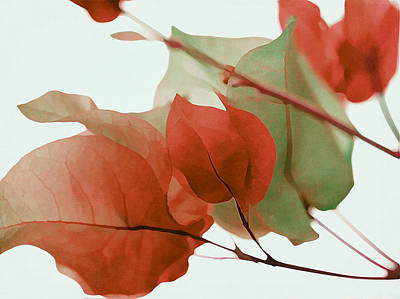 Photograph - Autumn Calling Bougainvillea by Fraida Gutovich
