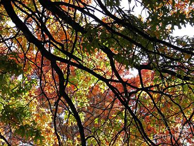 Photograph - Autumn Canopy by Sarah Loft